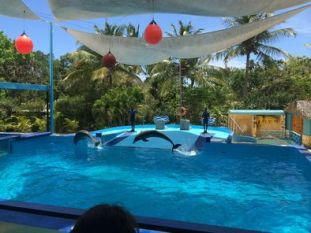 at-the-dolphin-show-photo_9013939-fit468x296